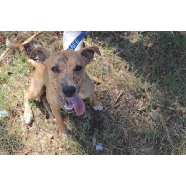 Photo of Berta D3858   Adoption Pending