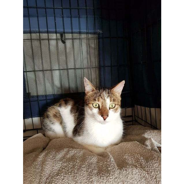 Photo of Charlie** On Trial With My New Family**