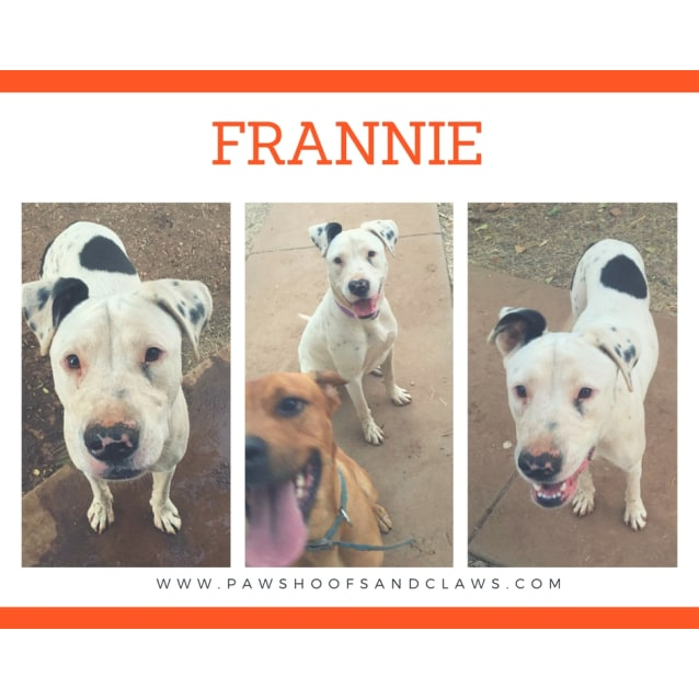 Photo of Frannie