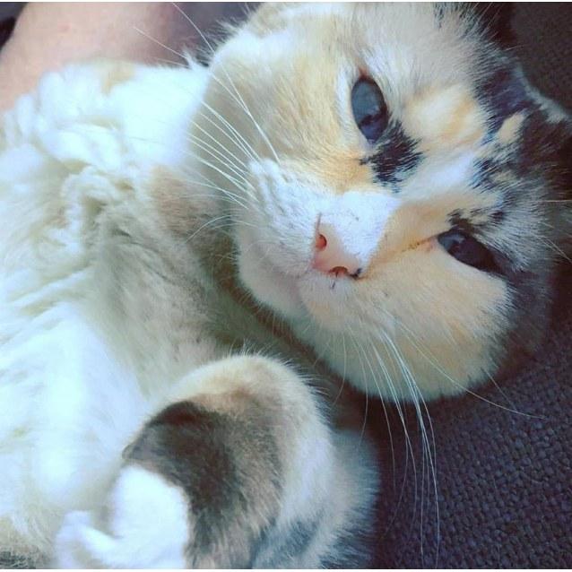 Photo of Vera Mae The Munchkin Cat!