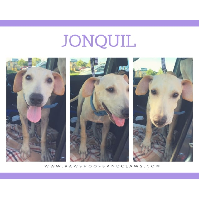 Photo of Jonquil
