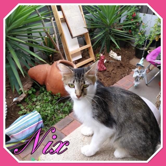 Photo of Nix