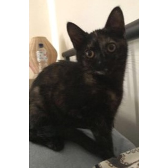 Photo of Sydney **2nd Chance Cat Rescue**