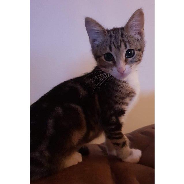 Photo of Zazzy