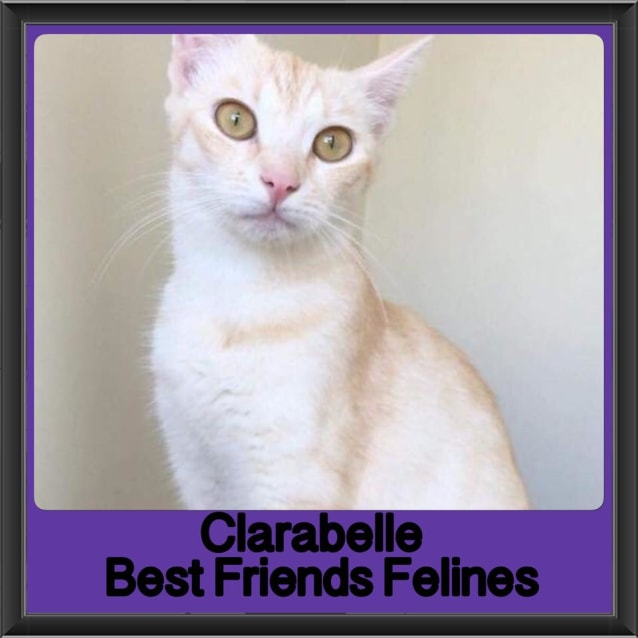 Photo of Clarabelle