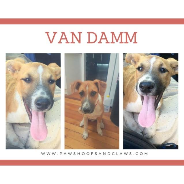 Photo of Van Damn (Vaan)