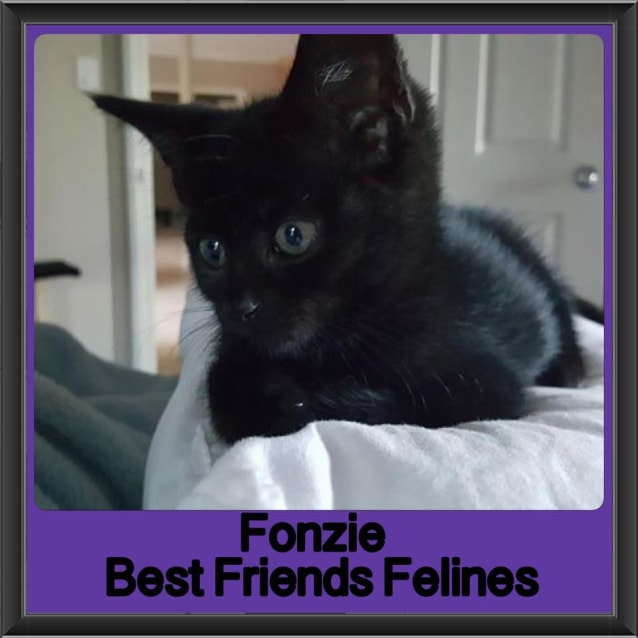 Photo of Fonzie