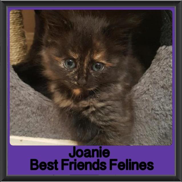 Photo of Joanie