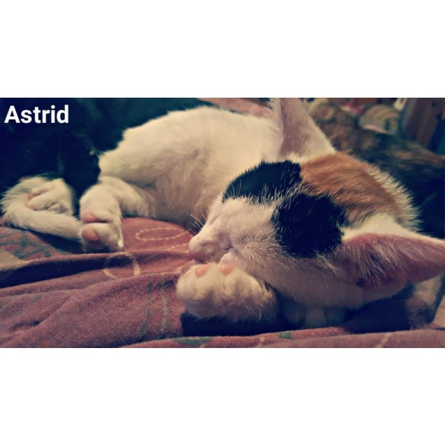 Photo of Astrid