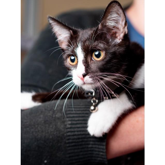 Photo of Tux The Kitten