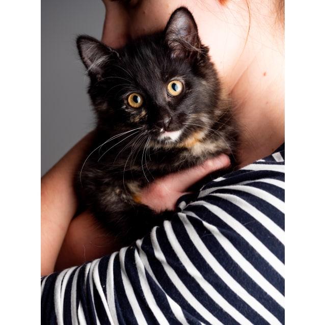 Photo of Topaz The Kitten