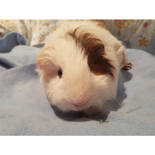 Photo of Winnie ( The Poo)