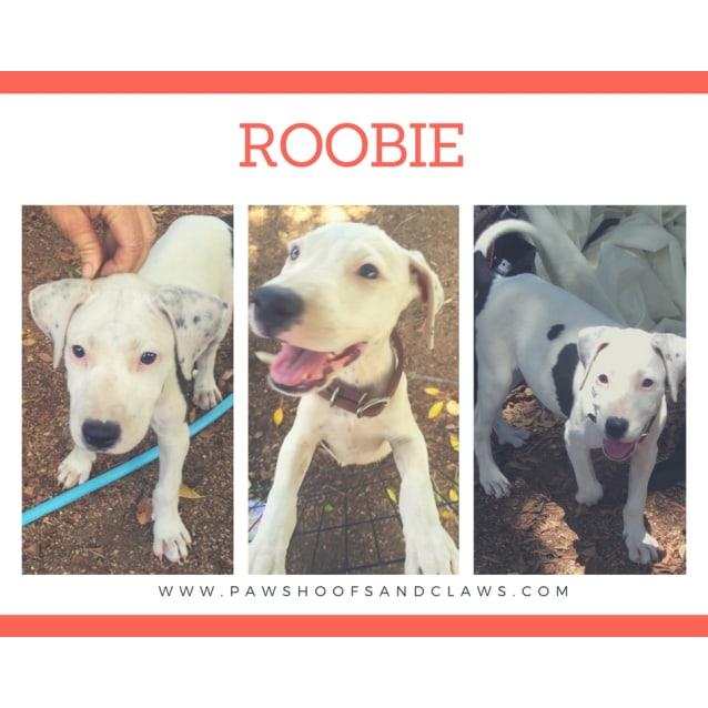 Photo of Roobie