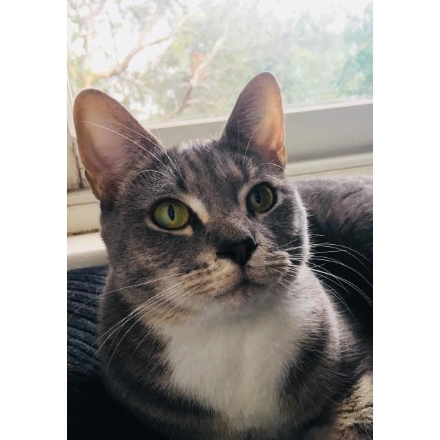 Photo of Nomi