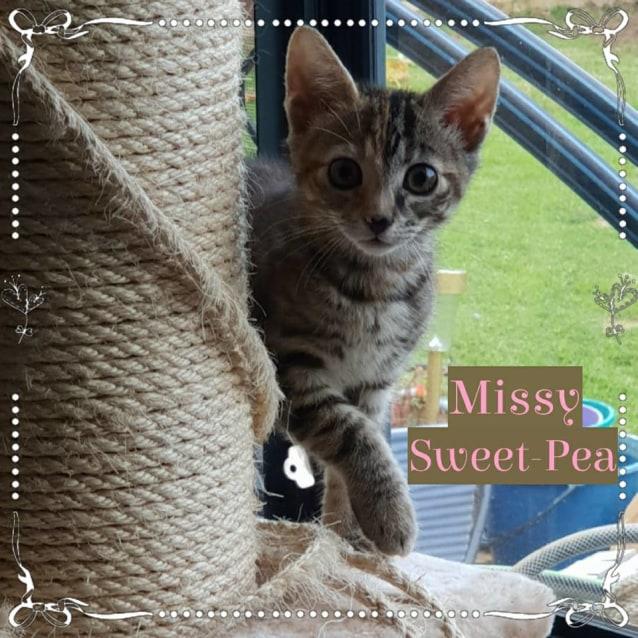 Photo of Missy Sweet Pea