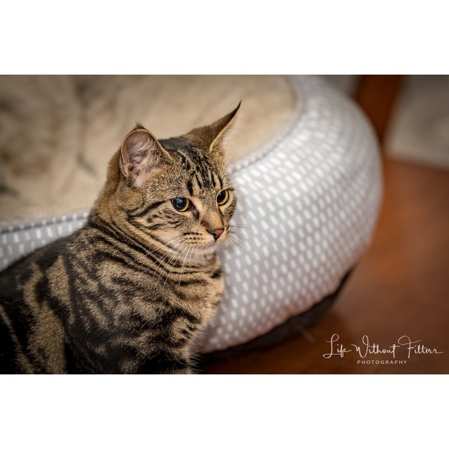 Photo of Mia