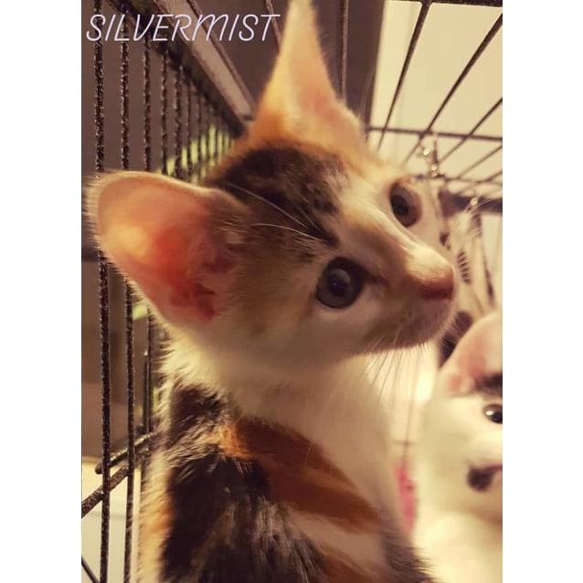 Photo of Silvermist