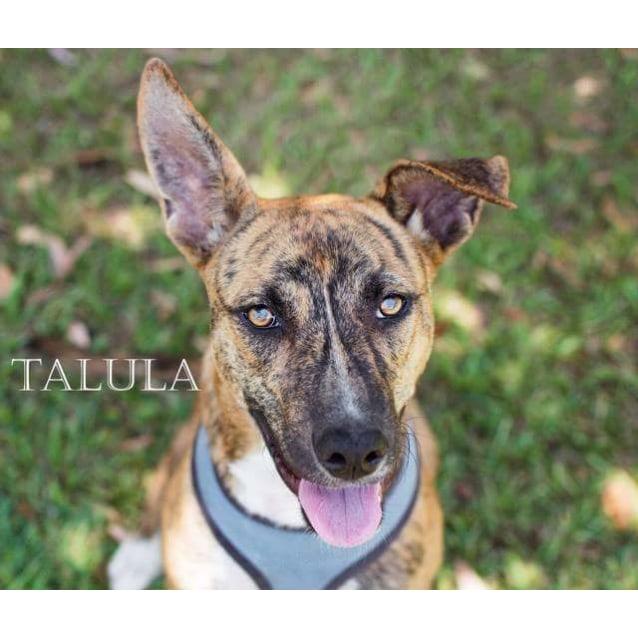Photo of Talula