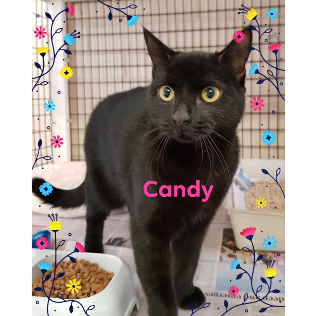 Photo of Candy (030418)