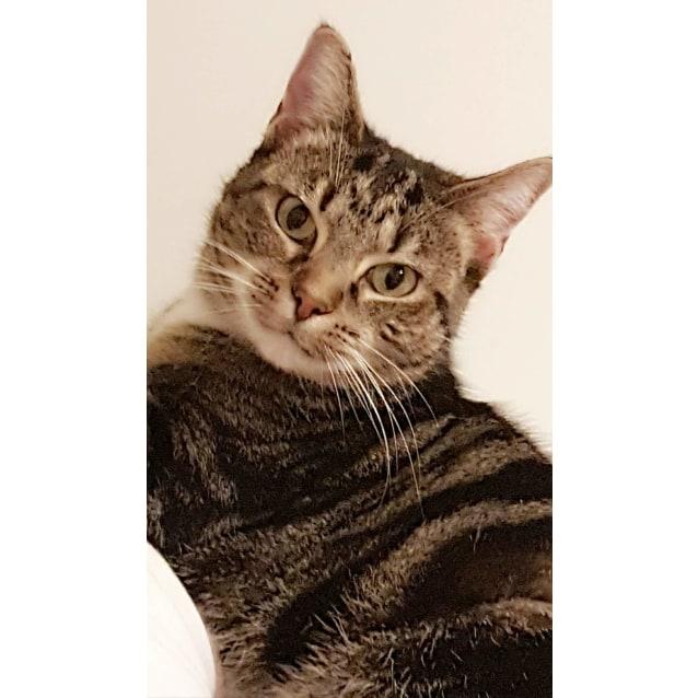 Photo of Missy The Lovebug