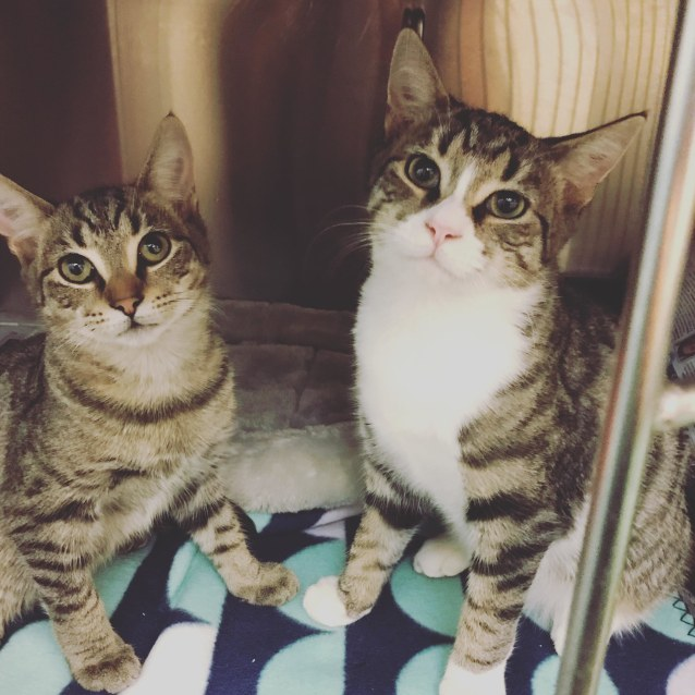 Photo of Julius & Caesar