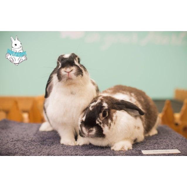 Photo of Leeloo And Raven