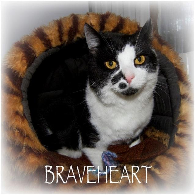 Photo of Braveheart
