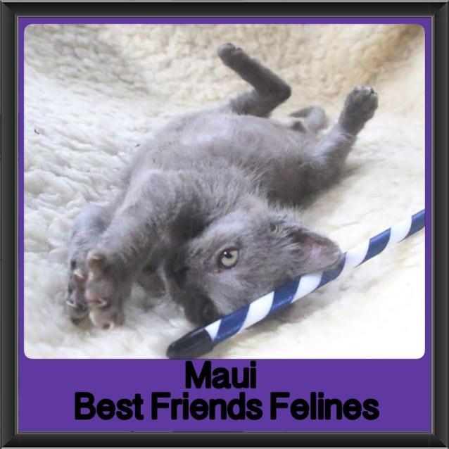 Photo of Maui