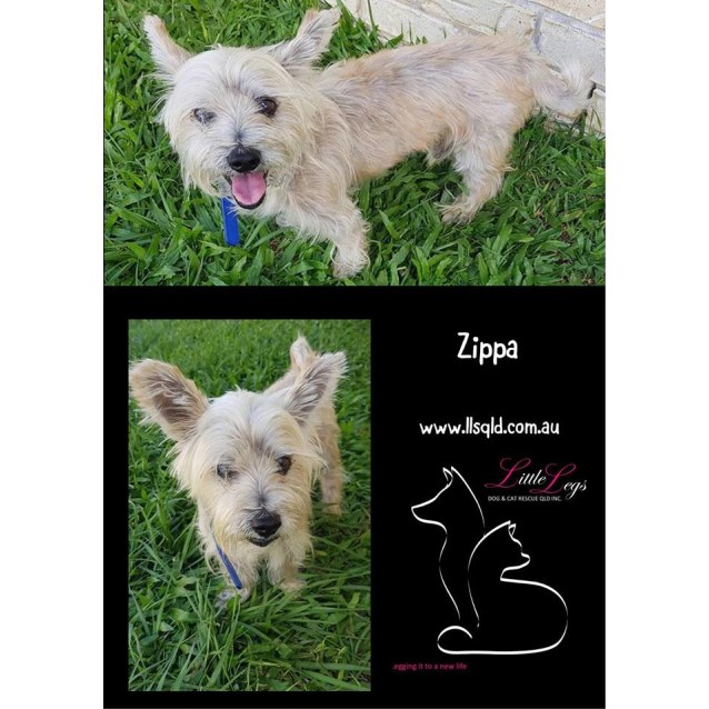Photo of Zippa