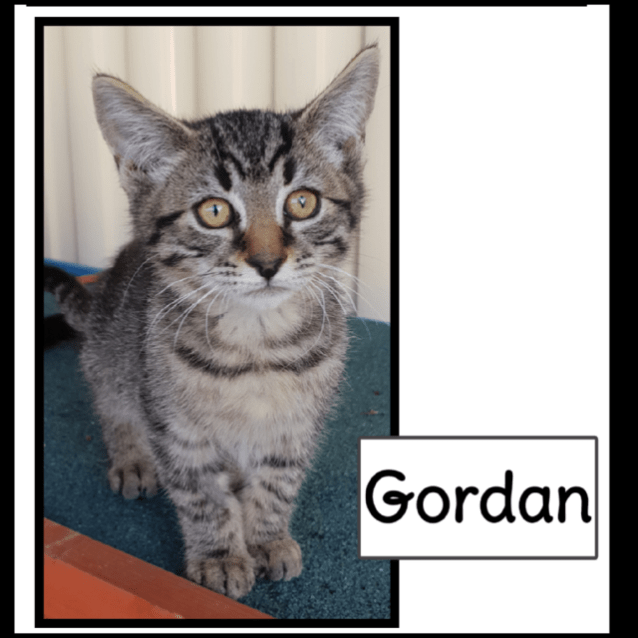Photo of Gordan