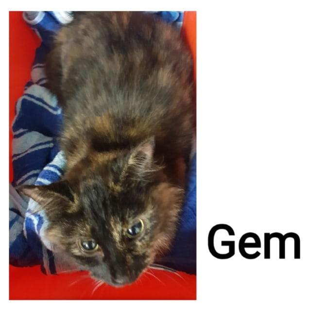 Photo of Gem