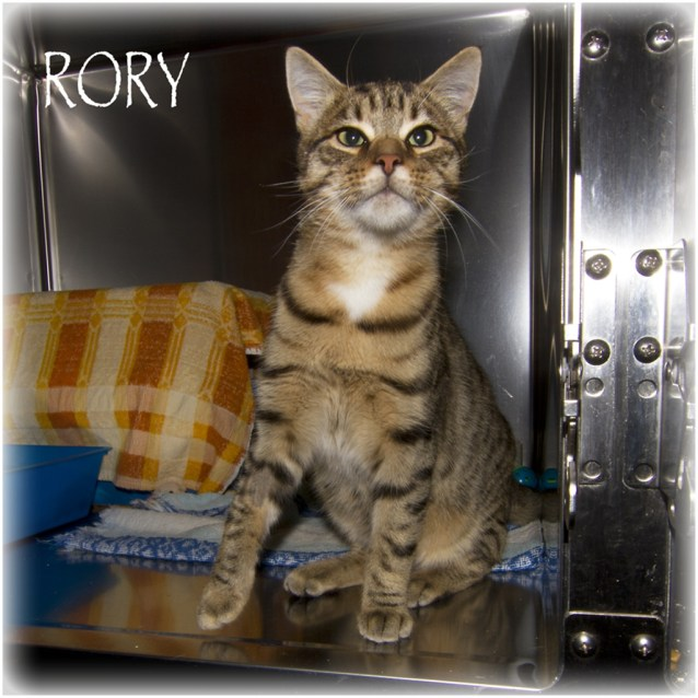 Photo of Rory