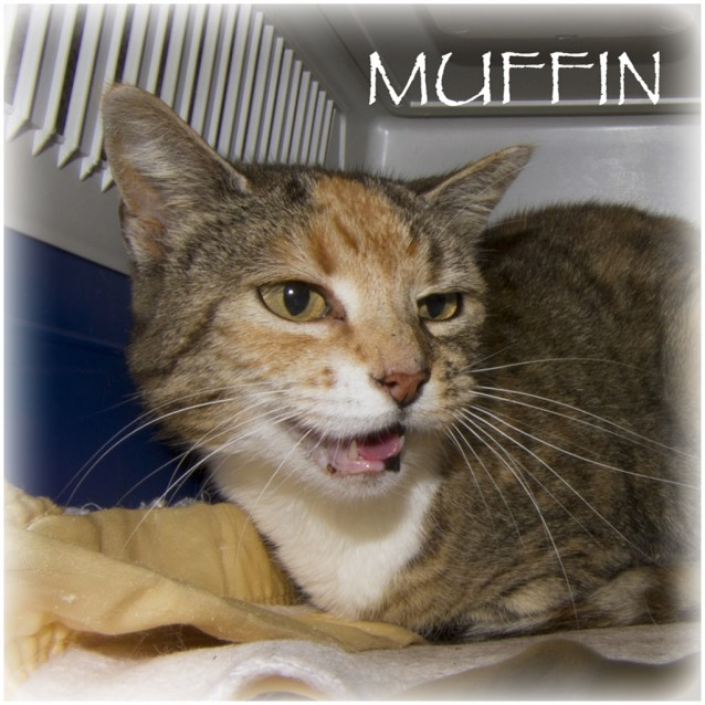 Photo of Muffin
