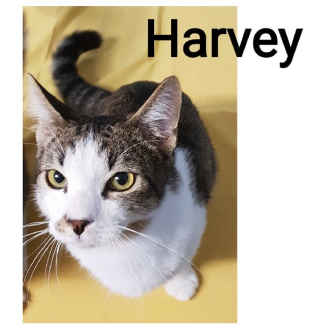 Photo of Harvey