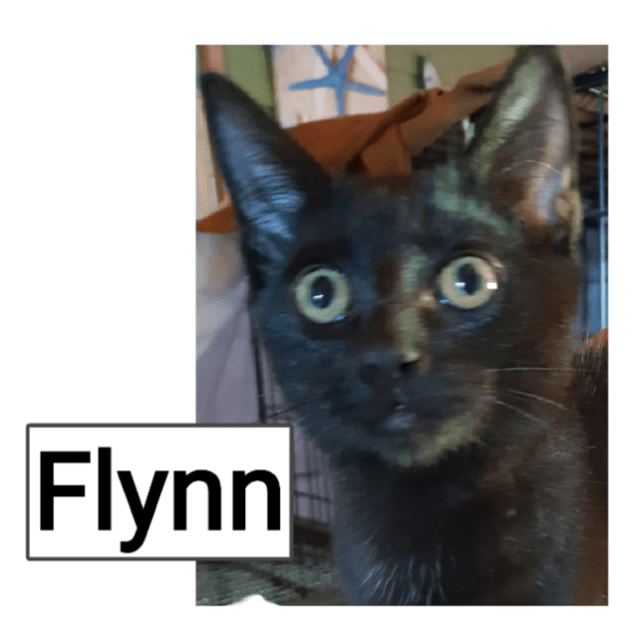 Photo of Flynn