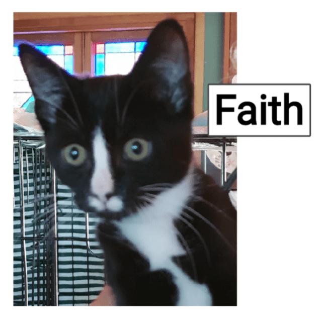 Photo of Faith