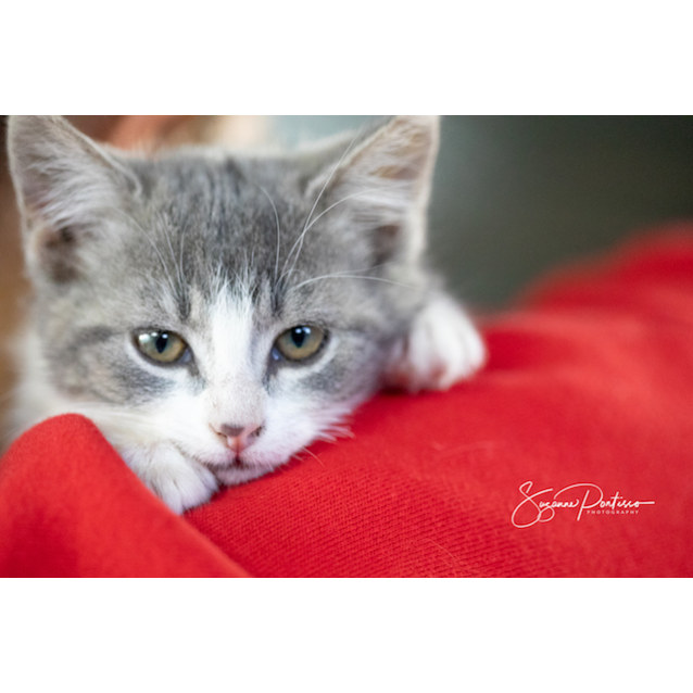 Photo of Gena   *Affectionate And Independent*
