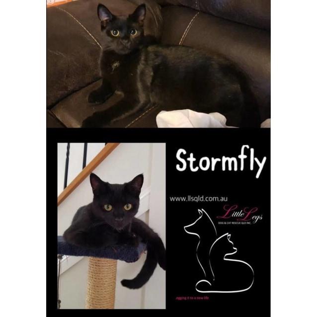 Photo of Stormfly