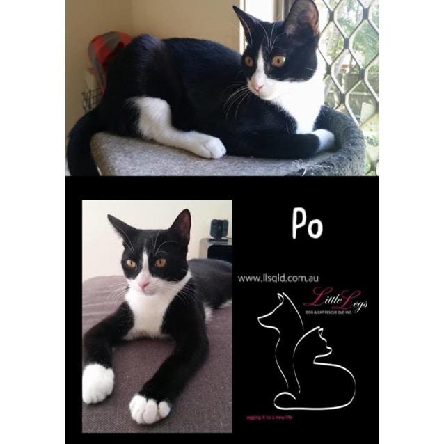 Photo of Po