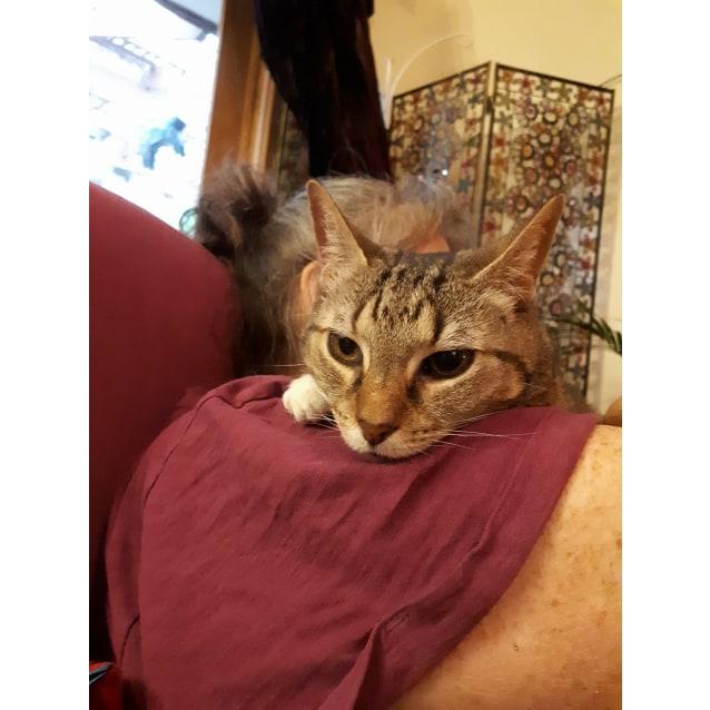 Photo of Imari (Located In Greensborough)