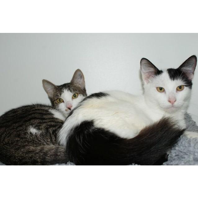 Photo of Fiona And Fidget Sua002612 / Sua002615