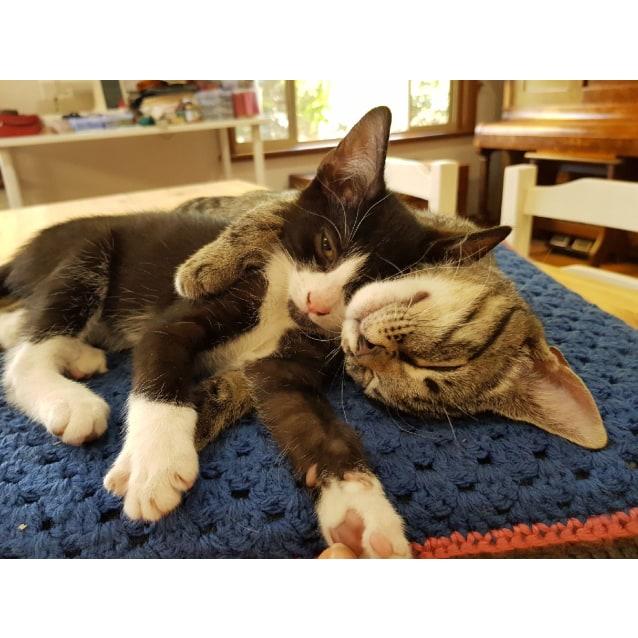 Photo of Flee & Hugo