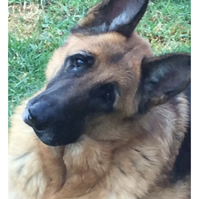 Photo of Banjo (Bonded Pair With Cindy)
