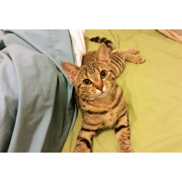 Photo of Savanna