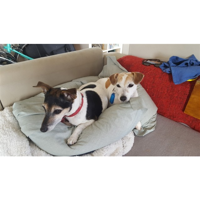 Photo of Piccolo Bonded With Millie