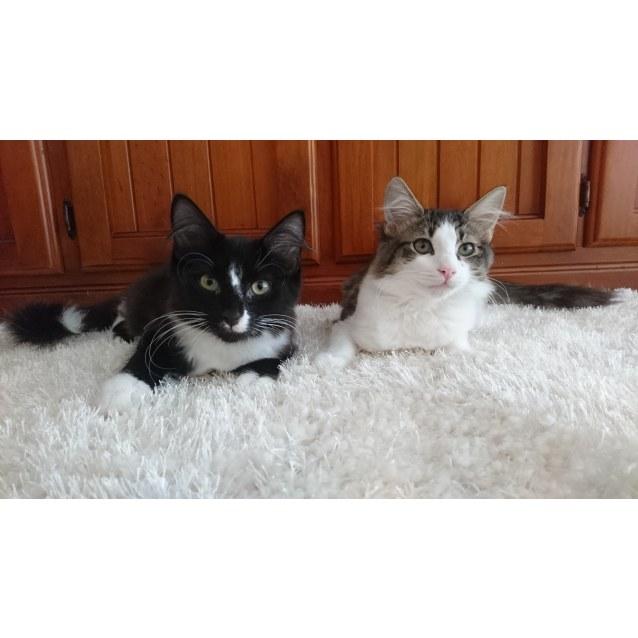 Photo of Tenzin And Tamlin