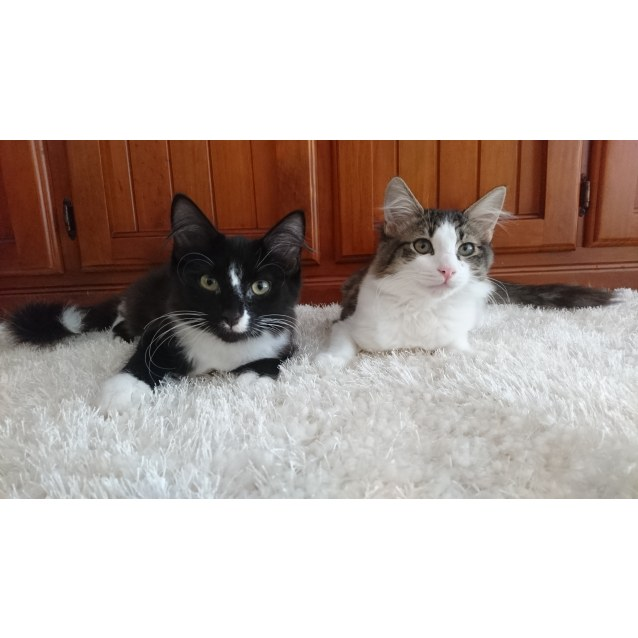 Photo of Tamlin And Tenzin