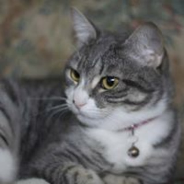 Photo of Suki (Adoption Fee $120)