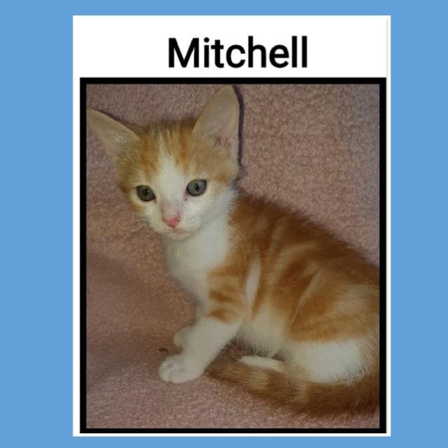 Photo of Mitchell