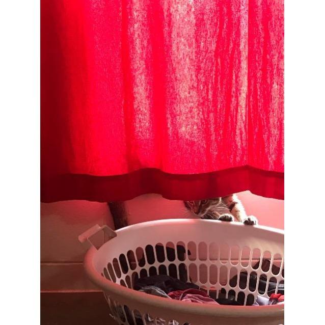 Photo of Lucky (Luna)